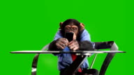 Green Screen Monkey Smart Phone video