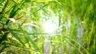 green shoots of spring grass in field and bokeh of sun light in reflection water video