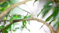 Green snake video