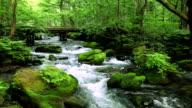 Green stream. video