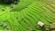 Green Terraced Rice Field in Chiangmai video