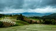Green Terraced Rice Field video