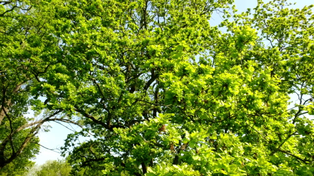 green tree against the sky video
