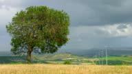 Green tree growing in field, wind turbines spinning, stormy sky, video