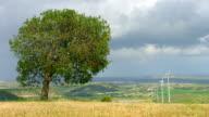 Green tree grows in field, wind turbines spin, beautiful landscape, video
