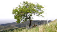 Green tree in windy day video
