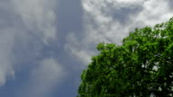 Green tree isolated on the blue sky and clouds background 3 axis stabilized shot video