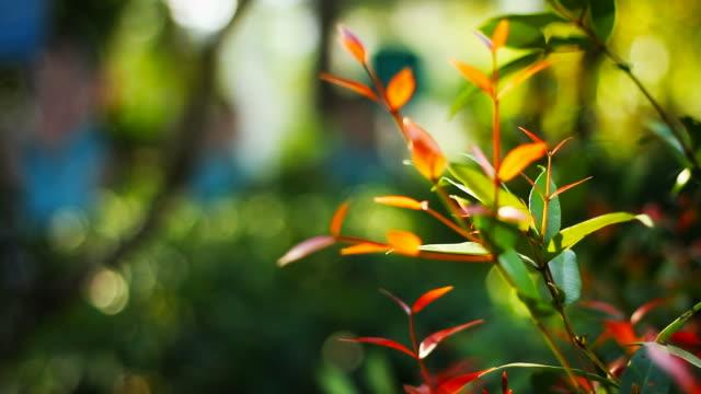 Green Tree Leaf in the garden video
