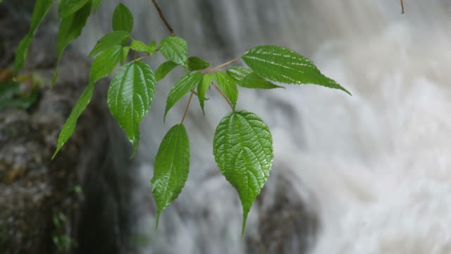 green tree leaves by waterfall video
