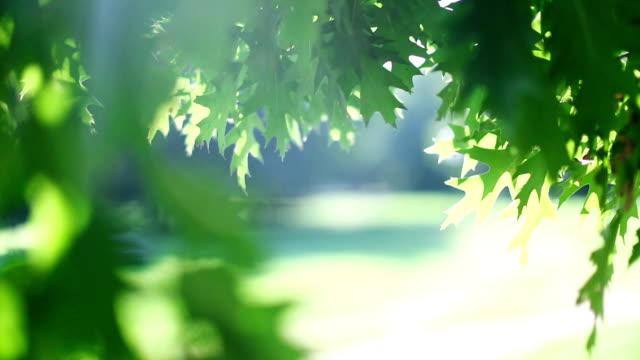 Green tree leaves video