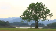 Green tree on background video