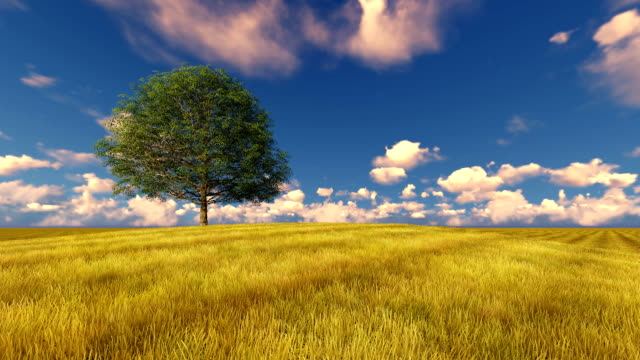 Green tree on field windy cloudy sky video