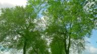Green Trees Drive video