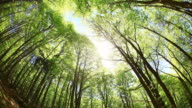 Green Trees in Spring, 360 degree camera spin, HD Video video