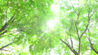 Green Trees video