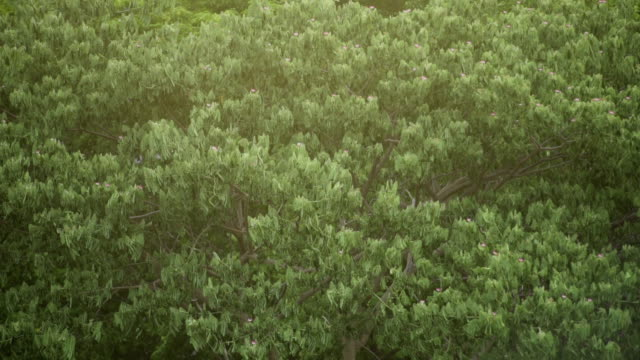 Green Trees. video