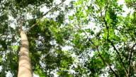 HD: Green Trees video
