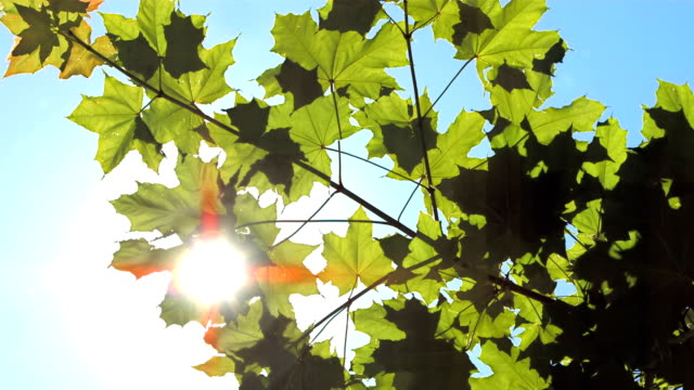 HD: Green Treetop video