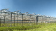 CLOSE UP: Green vegetables growing in stunning modern horticultural glasshouses video