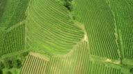 AERIAL Green Vineyards video