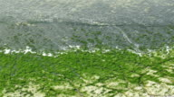 Green weeds scattered on the shore of the beach video