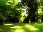 Green Woods PAL video