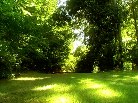 Green Woods PAL video