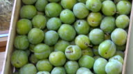 Greengages video