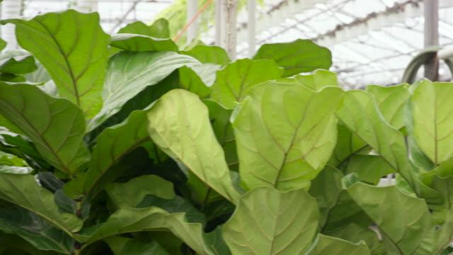 Greenhouse Plants video
