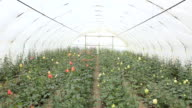 Greenhouse video