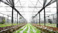 Greenhouse watering system in action video
