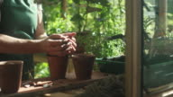 Greenhouse woman video