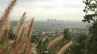 Greening Los Angeles video
