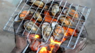 grilled scallop shell on furnace video