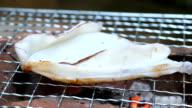 Grilling squid video