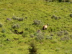PAL: Grizzly & cubs video