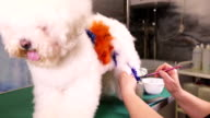 Groomer makes a drawing on a dog video