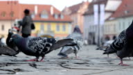 Ground View of Pigeons video