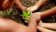 Group boys Planting a new tree, Slow motion video