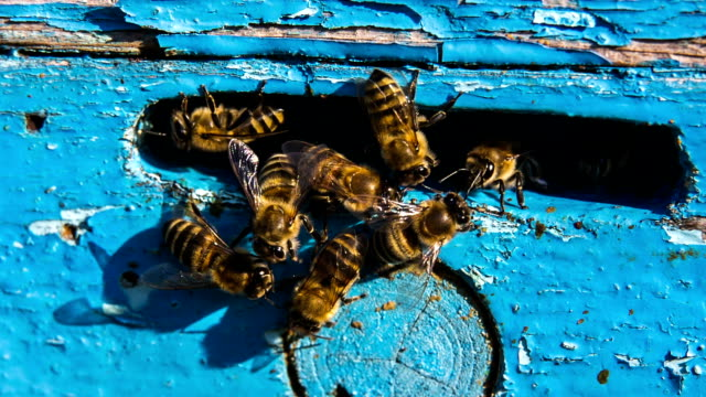 Group of Bees At The Entrance To Hive video