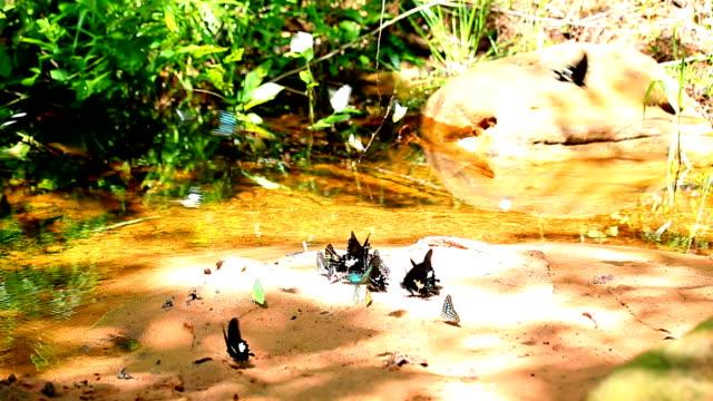 Group of butterflies video