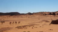 Group of Camels at Meroe Temples in Sudan video