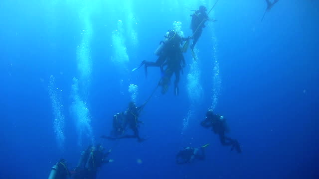 Group of Divers Preparing to Dive video