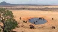 Group of elephants at a waterhole video