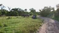 A group of five rhinos video