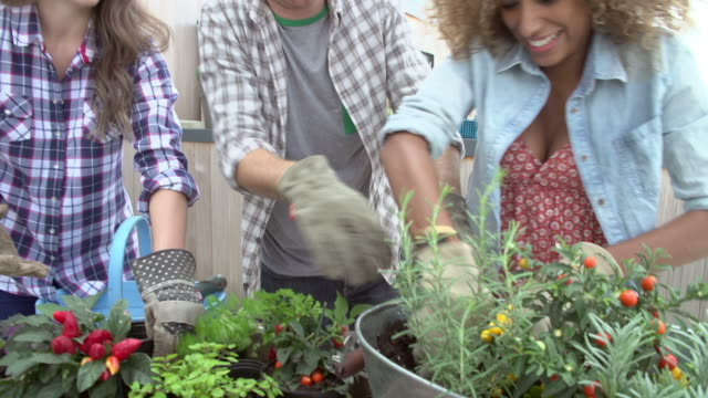 Group Of Friends Planting Rooftop Garden Together video