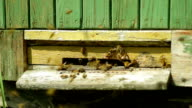 Group of honeybees flying into a beehive, closeup video