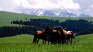 Group of Horses in the Foothills video