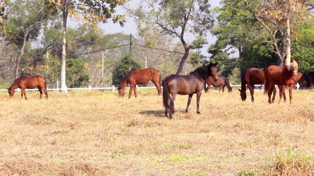 group of horses on a meadow in farm video