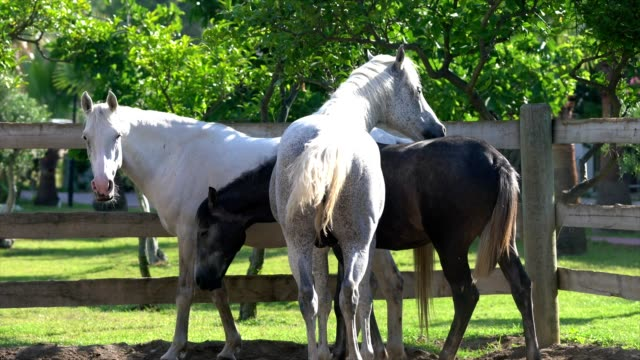Group of horses video